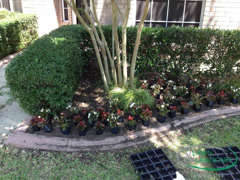 Seasonal Color And Landscape Maintenance In The Colony Tx