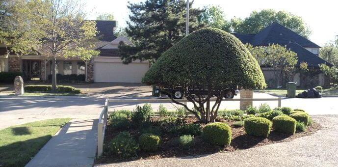 landscape installation project small tree