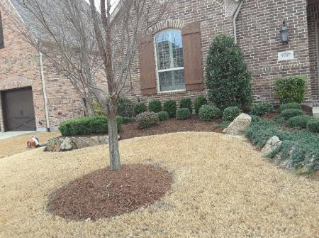 frisco texas landscape design dry lawn example