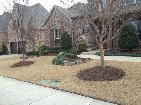 winter frisco texas dry lawn