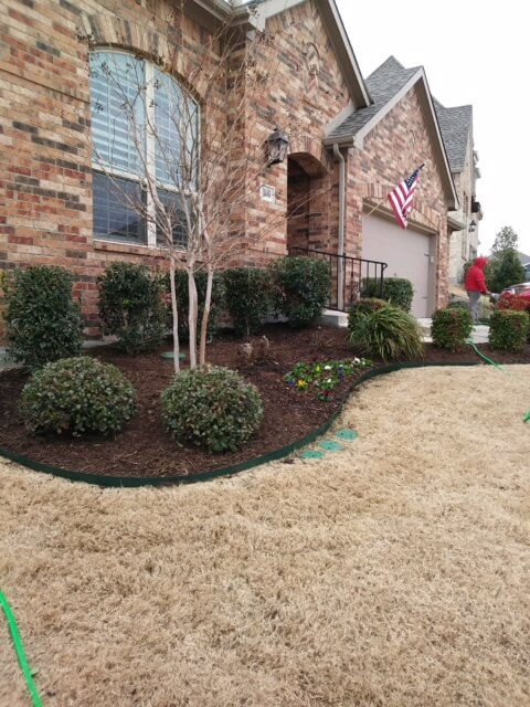 dry lawn care in texas