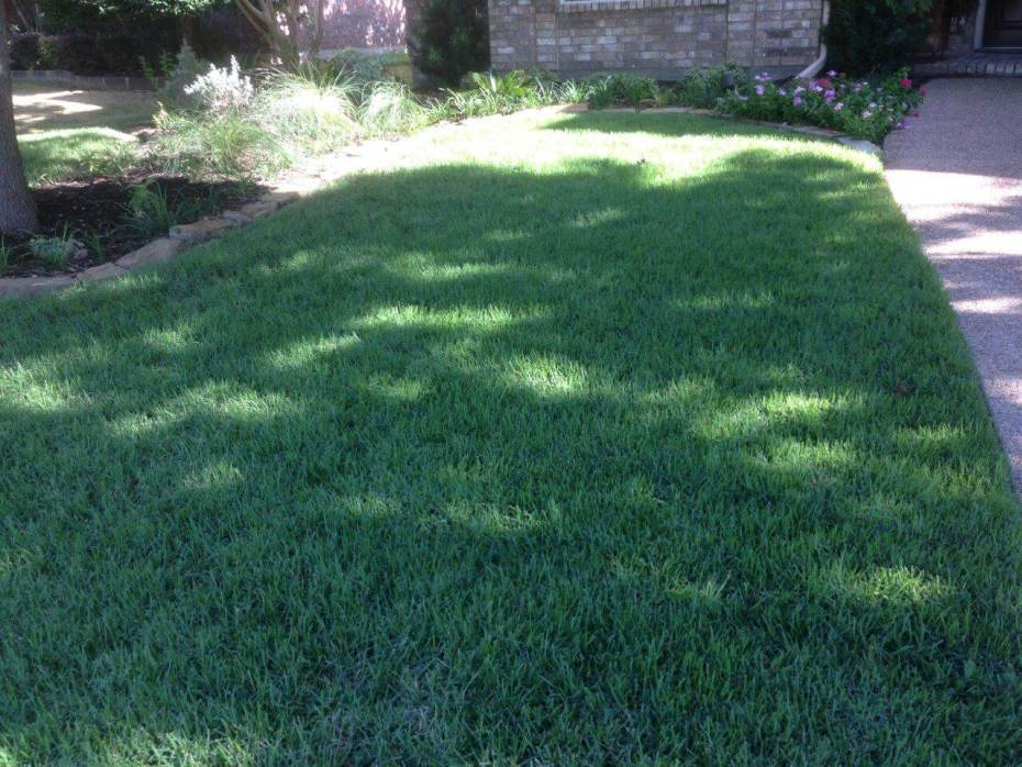 maintaining a lawn in frisco tx