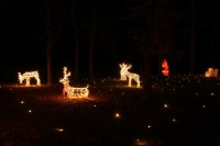 Home - Lawn Lights