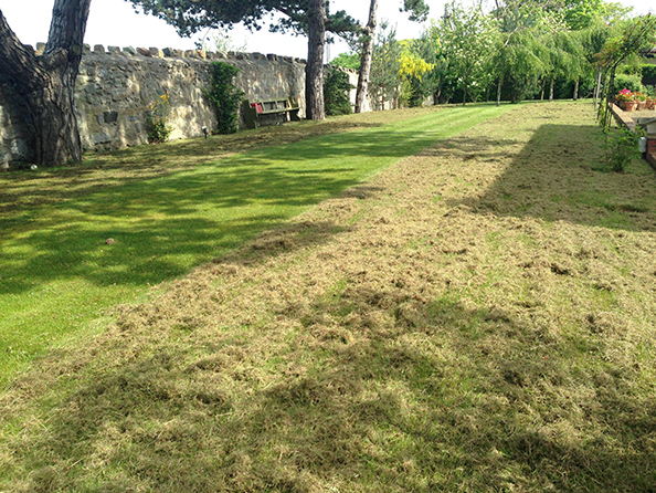 Image result for pic of thatch in garden