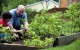 how-to-fertilize-your-lawn-4