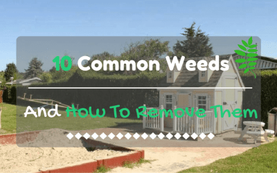 10-common-weeds-and-how-to-remove-them