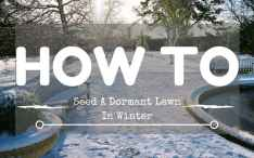 How-to-seed-a-dormant-lawn-in-winter-1