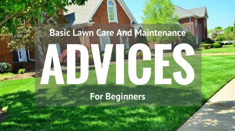 Basic Lawn Care And Maintenance Advices For Beginners | The Best ...