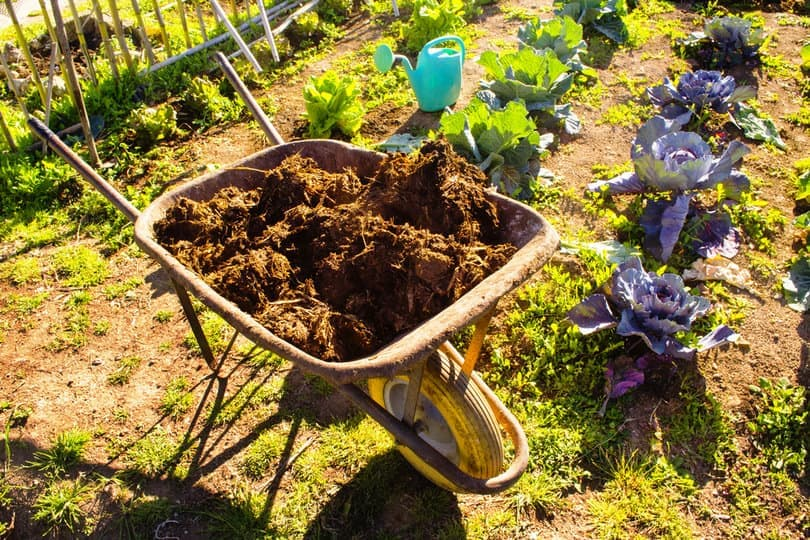 Manure fertilizer being applied on the flowers and plants in the garden