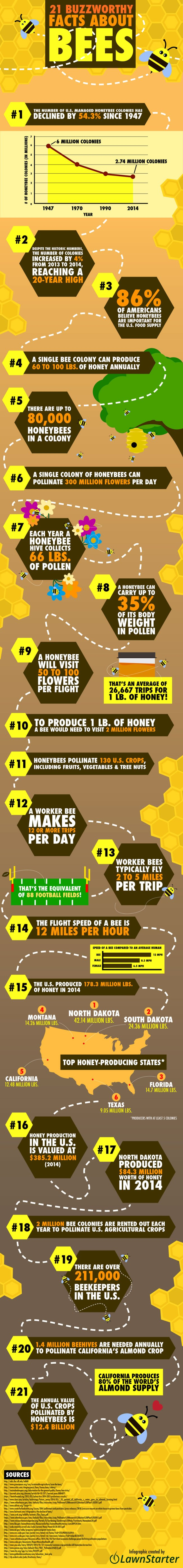 21 Buzzworthy Facts About Bees