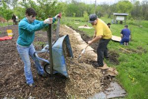 Weeding and mulching at the Lawrence Community Orchard