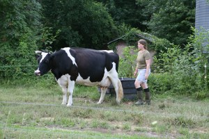 Traditional dairy farming in an intentional community