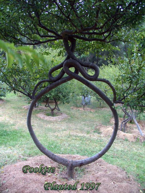 Arborsculpture The Art Of Tree Shaping  Lazer Horse