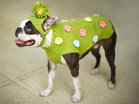 Pictures Of Animals Wearing Sweaters Lazer Horse