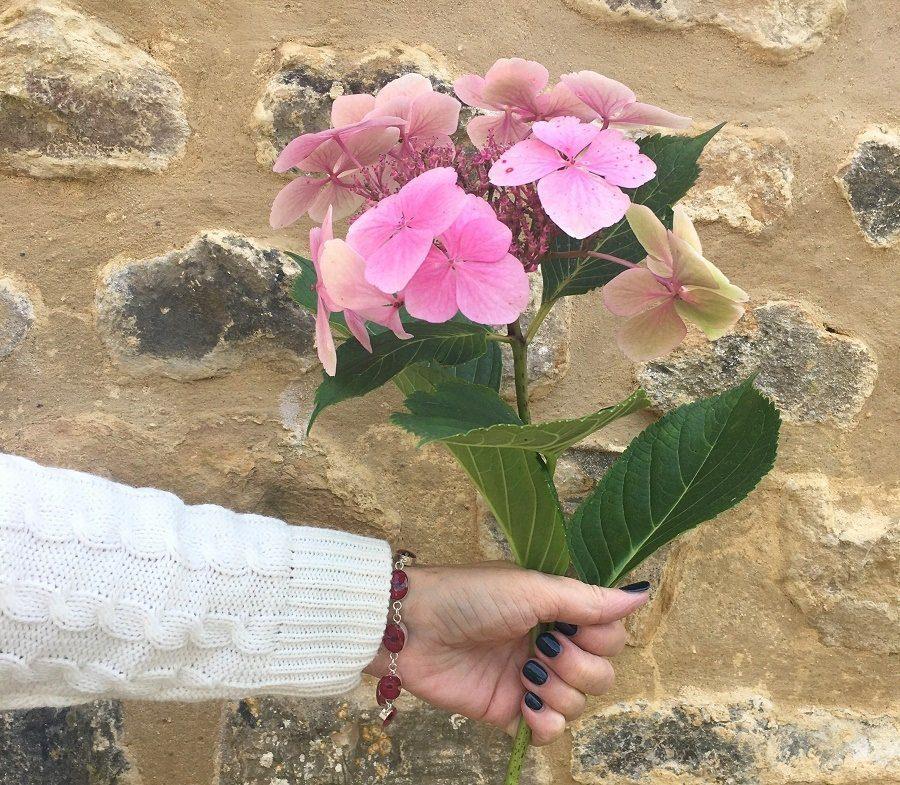pink hydrangeas week 4 ashley and laurie linku