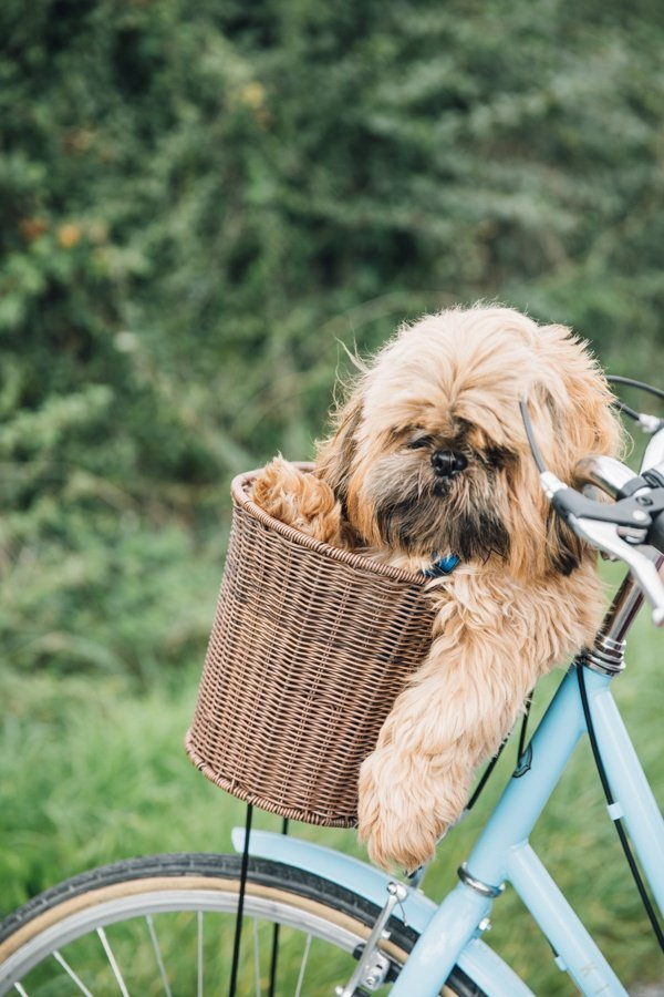 Murphy's First Bike Ride & Lotus lace Up Ankle Boots