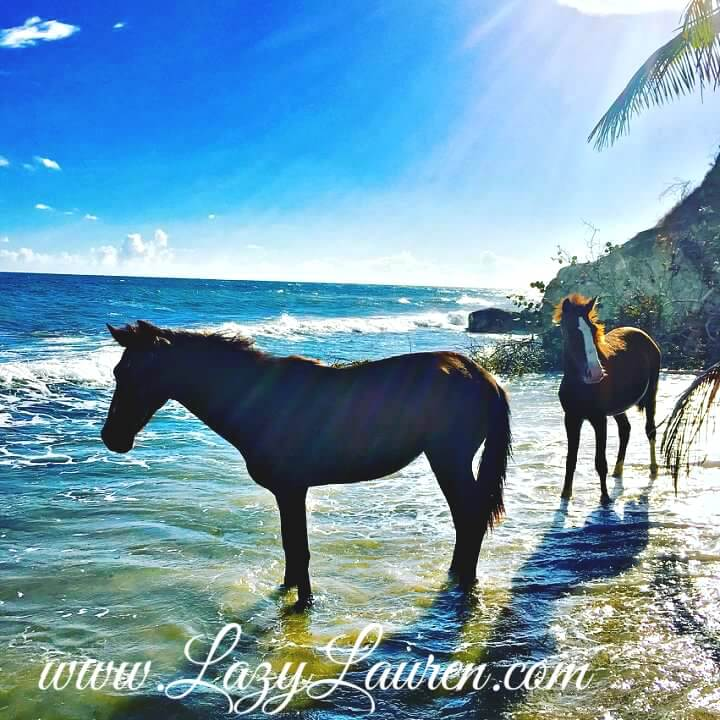 Vieques Puerto Rico Travel Guide - Everything you need to know!