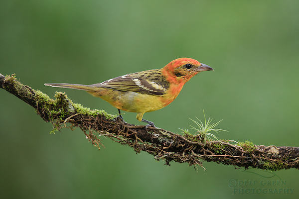 RM-DG-birds-295
