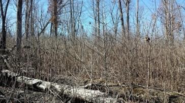 oak grassland tn.