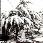 Winter Storm Blankets Pioche in Snow