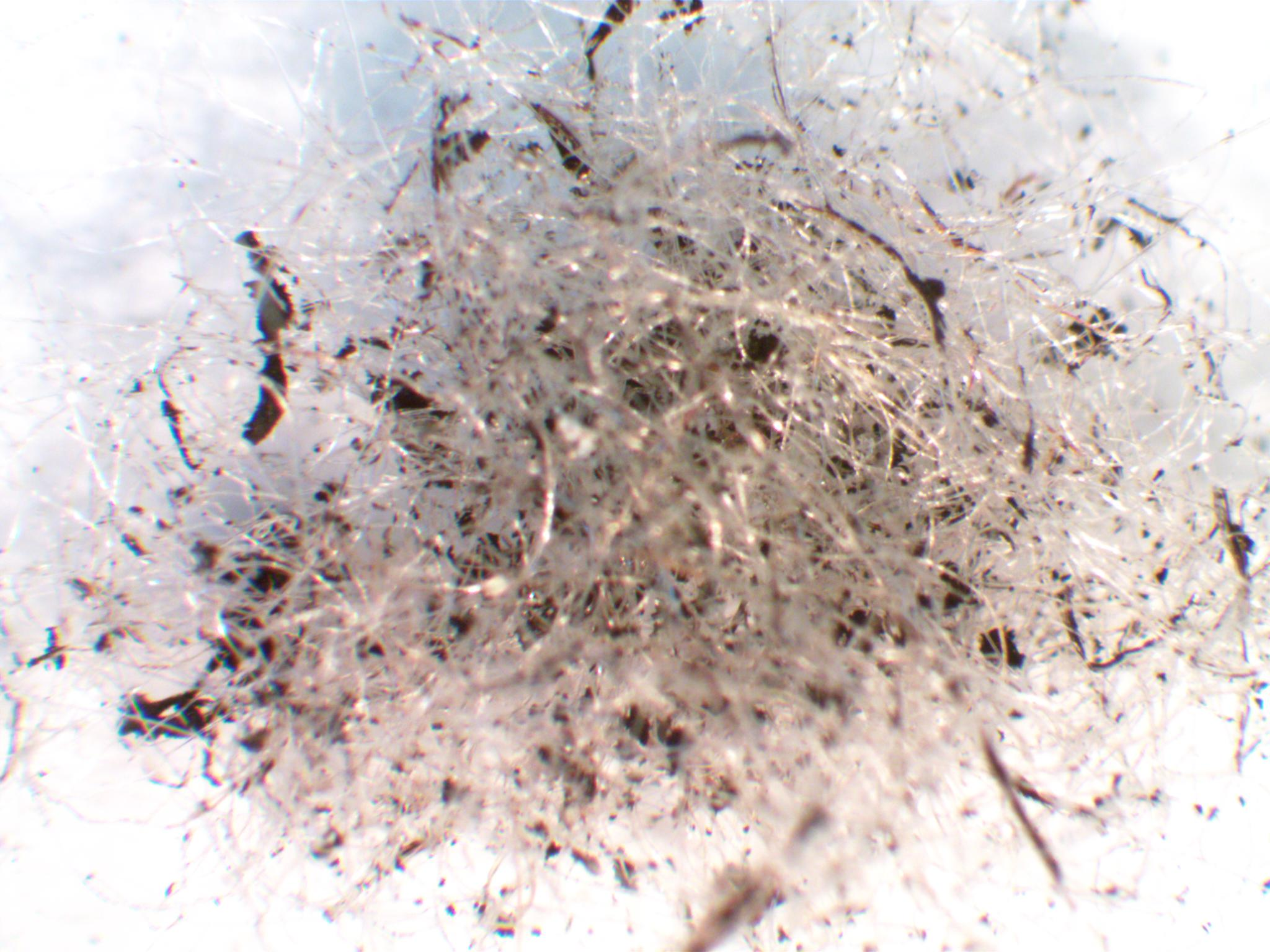 Identification Of Residential Dust Using Microscopy Lcs