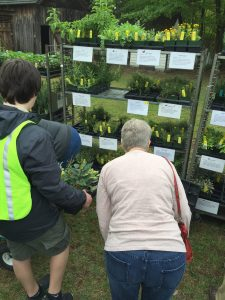 Herb Festival at the Lexington County Museum Celebrates 8 Years! @ Lexington County Museum