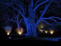 Blue Spotlight Tree