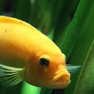 [Témoignage] Un poisson dans l'eau  (9 ans)