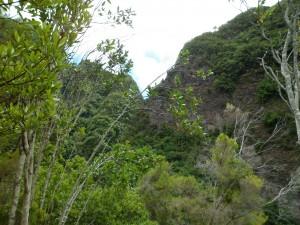 La forêt de Los Tillos (1)
