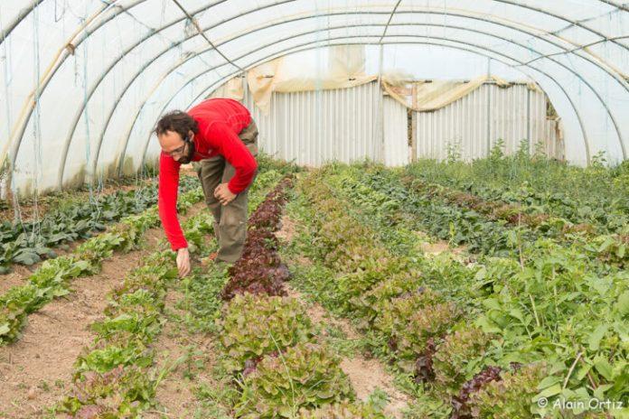 Michel Rabat serre salade