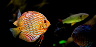 plan-littoral-21-carole-delga-inaugure-le-nouvel-aquarium-de-banyuls-sur-mer-le-29-novembre