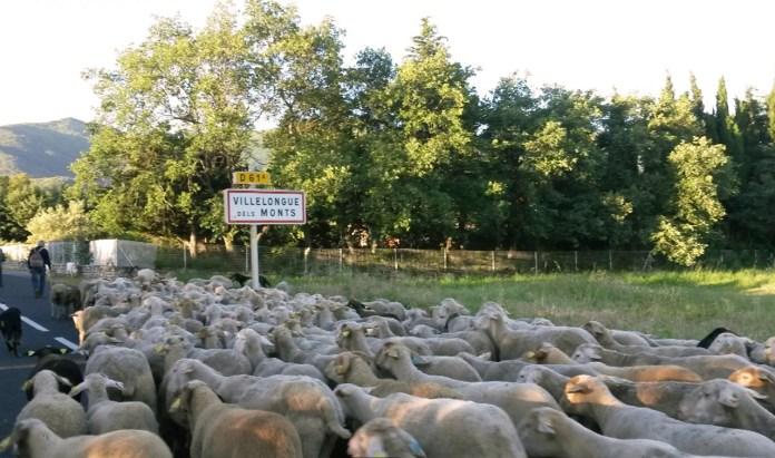 revenons-a-nos-moutons-vendredi-1er-decembre-a-elne