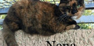 noel-des-animaux-les-8-et-9-decembre-le-pere-noel-ce-sera-vous