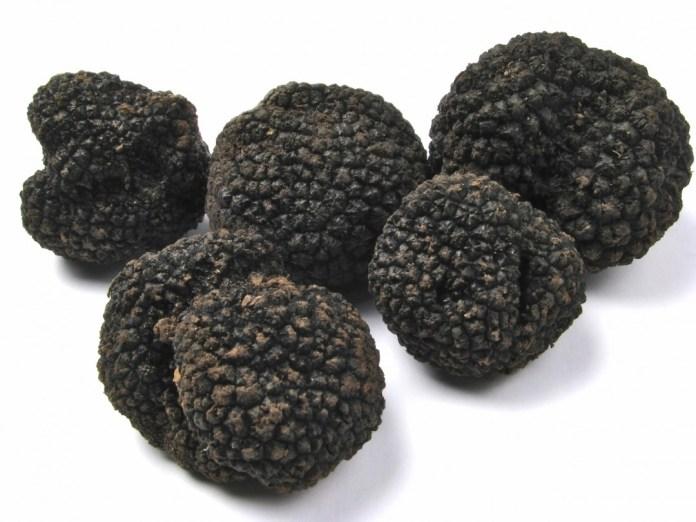 le-departement-produit-annuellement-300-kilos-de-truffes