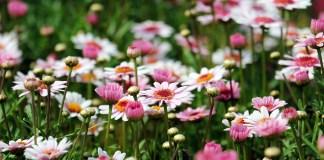 preparez-vos-plants-et-boutures-pour-le-trocplantes-du-soler-le-dimanche-7-avril-2019-au-lac-du-moulin