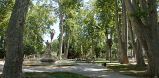 vegetalisation-urbaine-une-naissance-deux-arbres-plantes