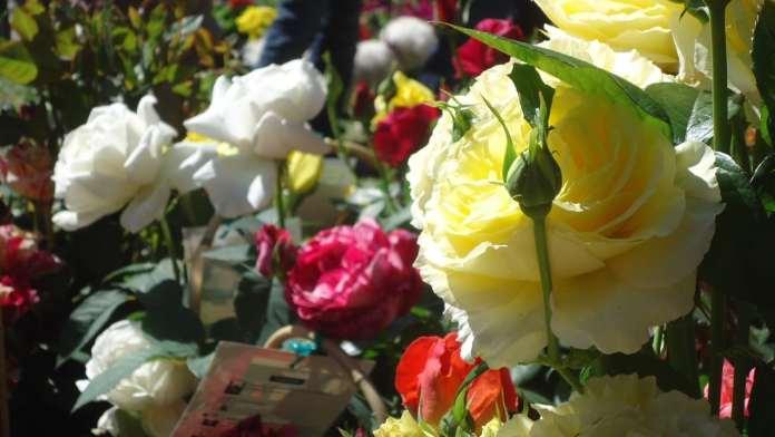 Onzième floralies de Juhègues...