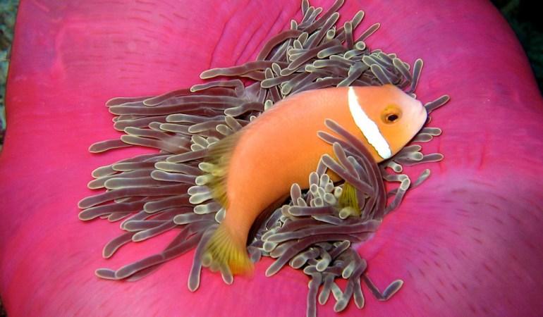 Maldives : Les plus beaux sites de plongée