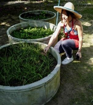 plantation jardin cours de cuisine thaïlande
