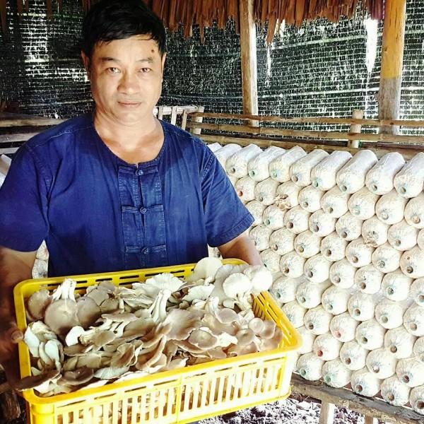 Culture de champignons écologique au Paradise Koh Yao