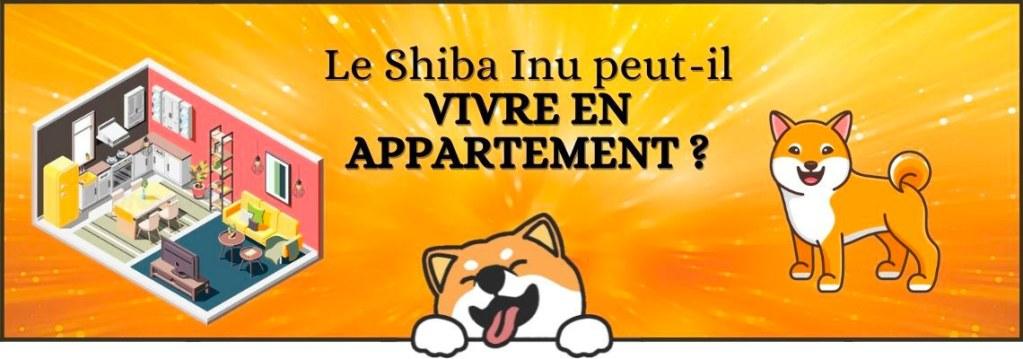 Le Shiba Inu peut-il vivre en appartement ?