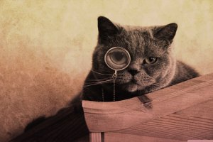hipster-web-cat
