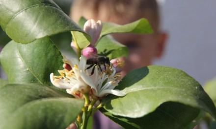 La startup Beesolispropose aux entreprises d'accueillir… des abeilles !