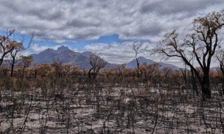 Australie : une nouvelle vague de chaleur attendue