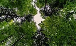 «En 2 ans il y'aura 8 micros forêts à Toulouse»
