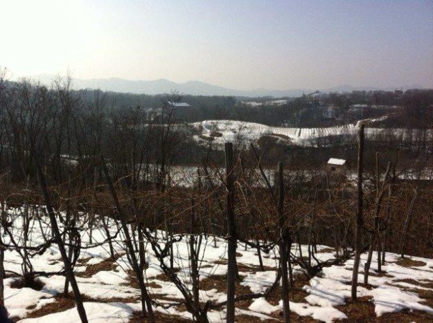 Boca vineyards in Piedmonte
