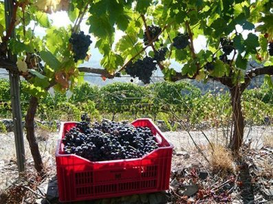 Harvest-Bodegas-Marco-Abella-Priorat