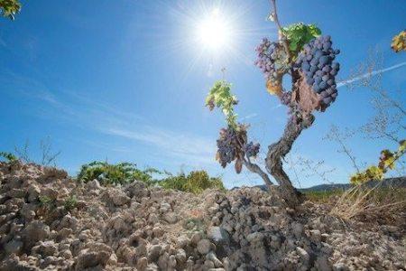 acustic celler vineyard - Monsant-Grenache