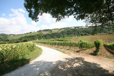 Andrea Felici-Azienda Agricola Biologica-Lea and Sandeman-Wine Merchants-Vineyards