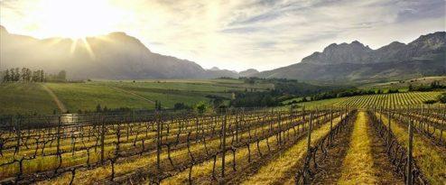 Stellenbosch-Vineyards-Email